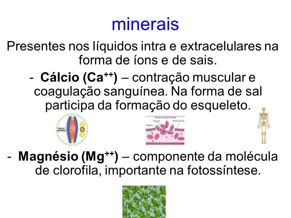 minerais Presentes nos líquidos intra e extracelulares na forma de íons e de sais.