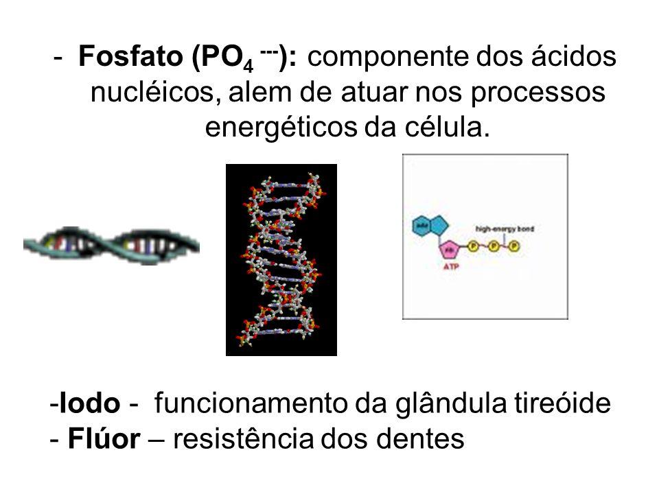 Fosfato (PO4 ---): componente dos ácidos nucléicos, alem de atuar nos processos energéticos da célula.