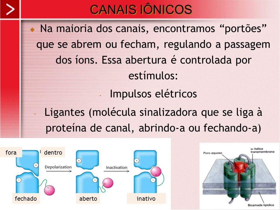 CANAIS IÔNICOS