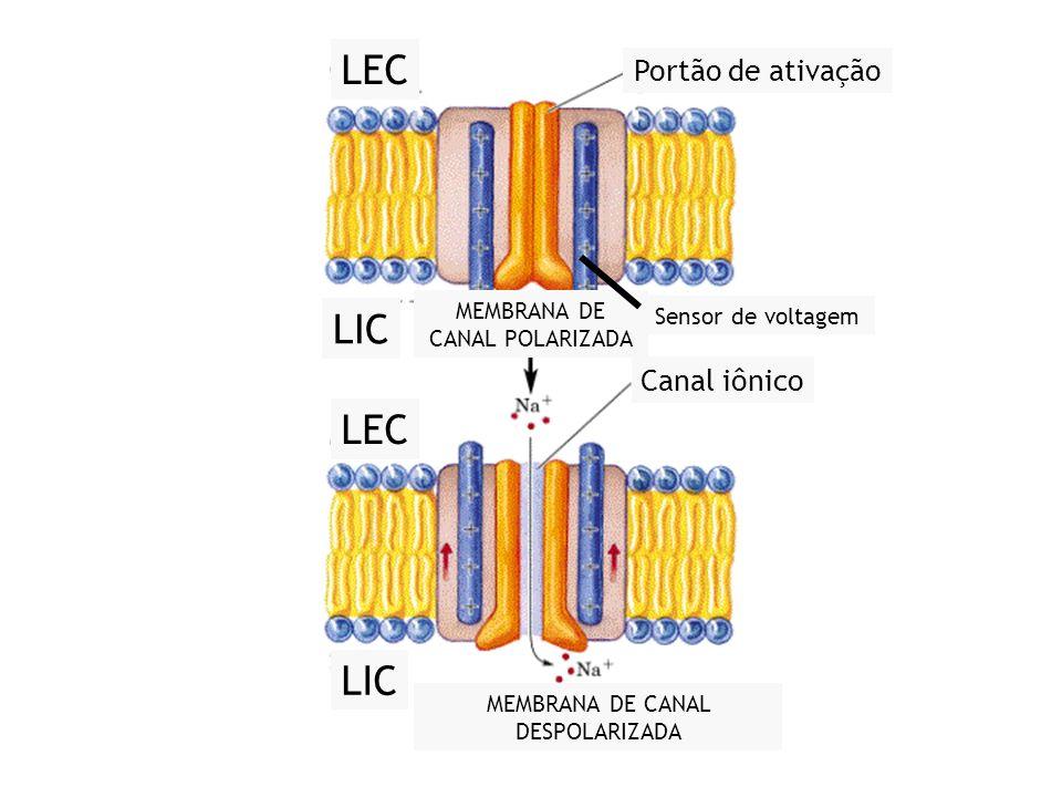 LEC LIC LEC LIC Portão de ativação Canal iônico