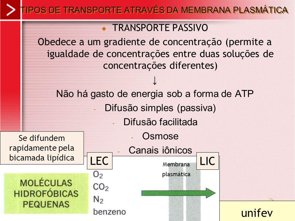 TIPOS DE TRANSPORTE ATRAVÉS DA MEMBRANA PLASMÁTICA