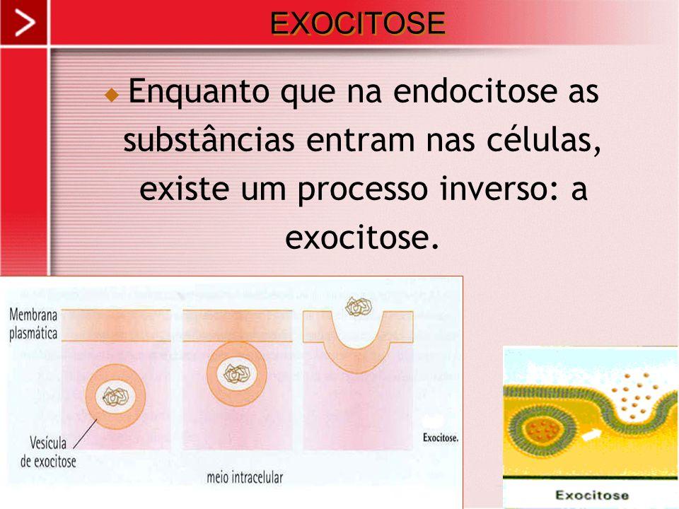 EXOCITOSE Enquanto que na endocitose as substâncias entram nas células, existe um processo inverso: a exocitose.