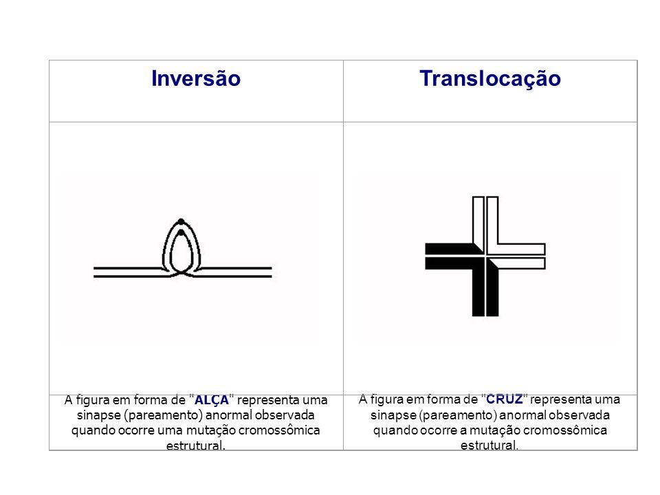 Inversão Translocação