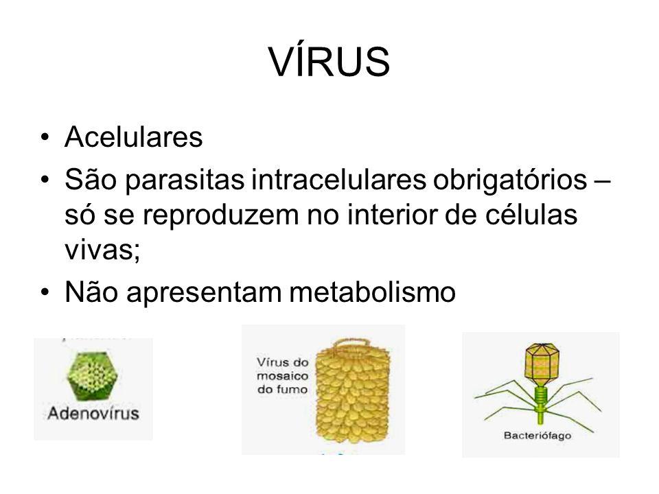 VÍRUS Acelulares. São parasitas intracelulares obrigatórios – só se reproduzem no interior de células vivas;