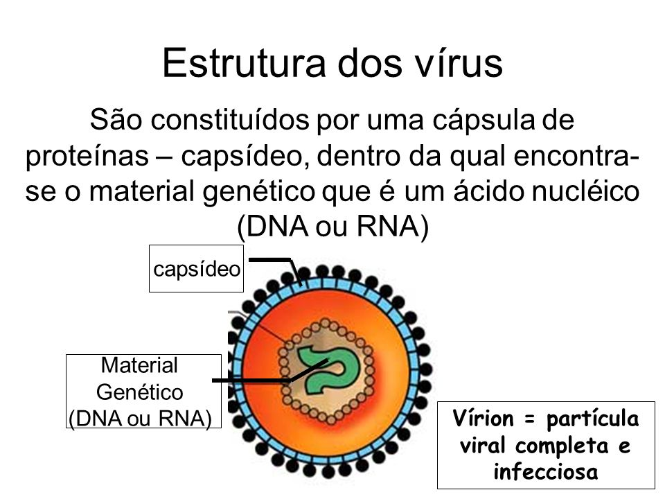 Vírion = partícula viral completa e infecciosa