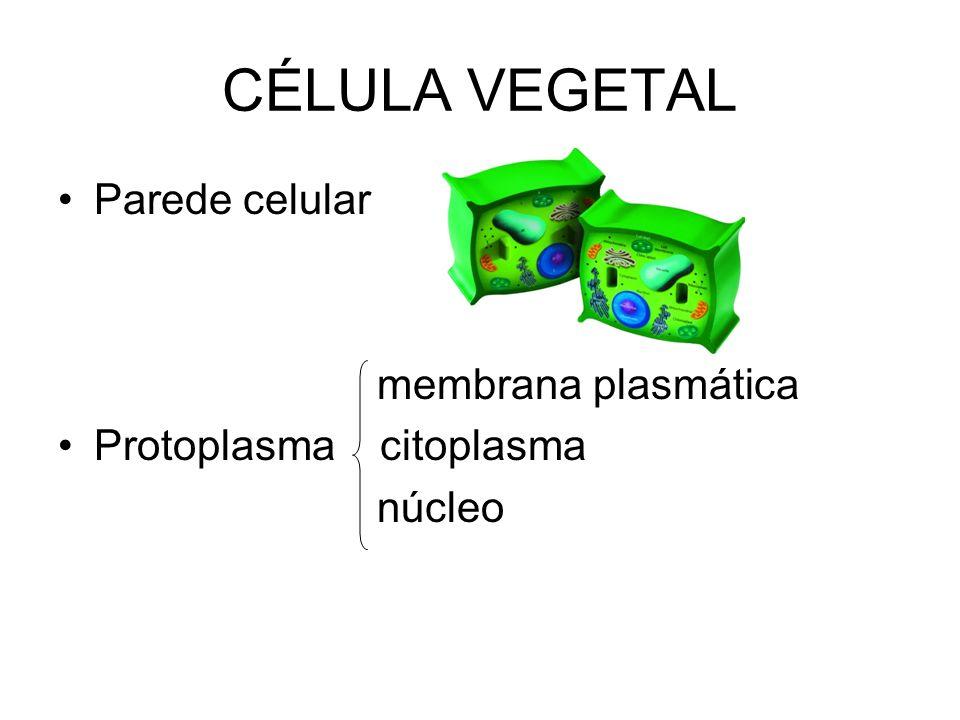 CÉLULA VEGETAL Parede celular membrana plasmática