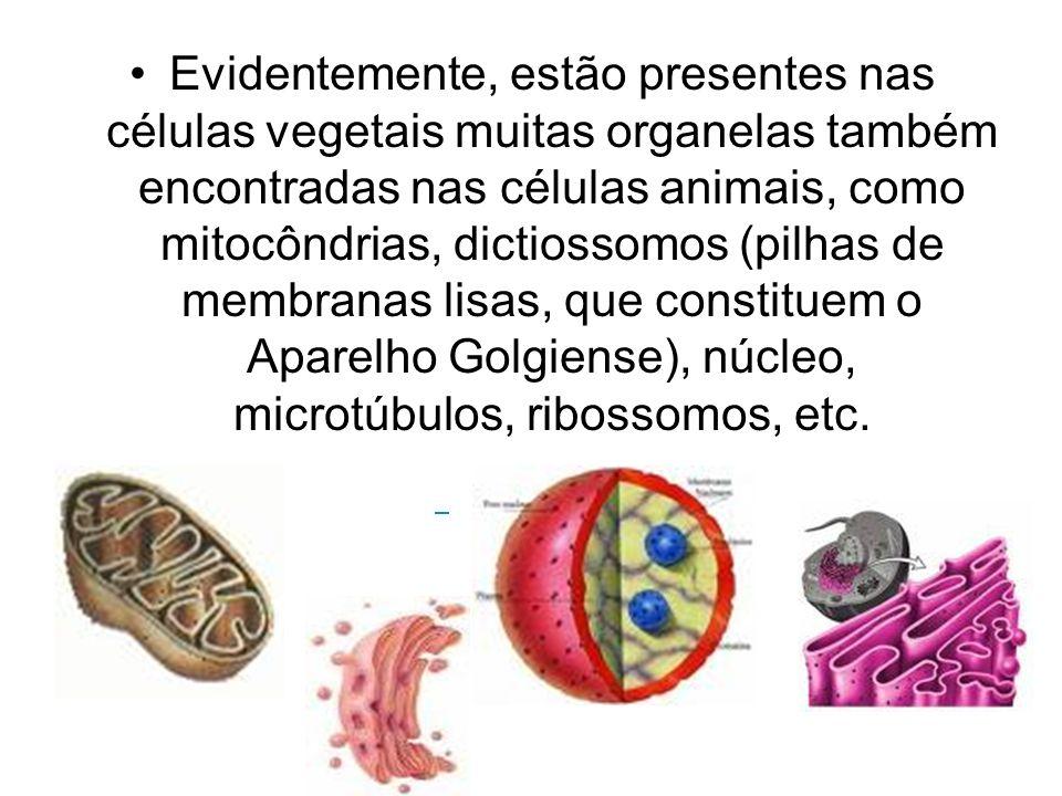 Evidentemente, estão presentes nas células vegetais muitas organelas também encontradas nas células animais, como mitocôndrias, dictiossomos (pilhas de membranas lisas, que constituem o Aparelho Golgiense), núcleo, microtúbulos, ribossomos, etc.