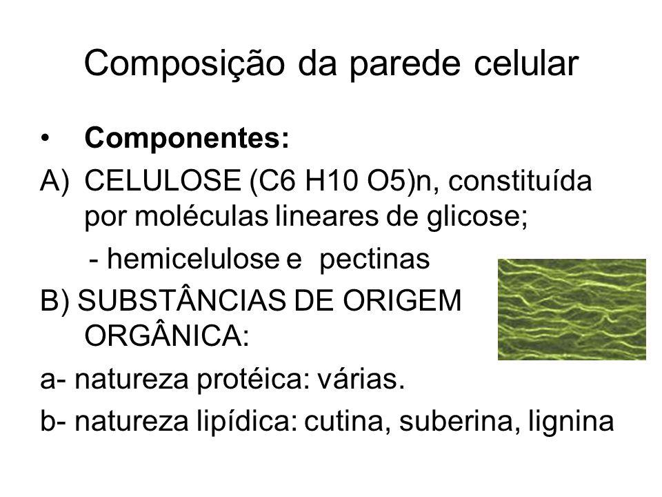 Composição da parede celular