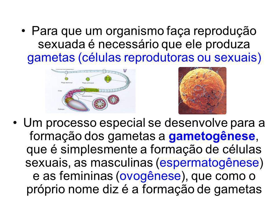 Para que um organismo faça reprodução sexuada é necessário que ele produza gametas (células reprodutoras ou sexuais)