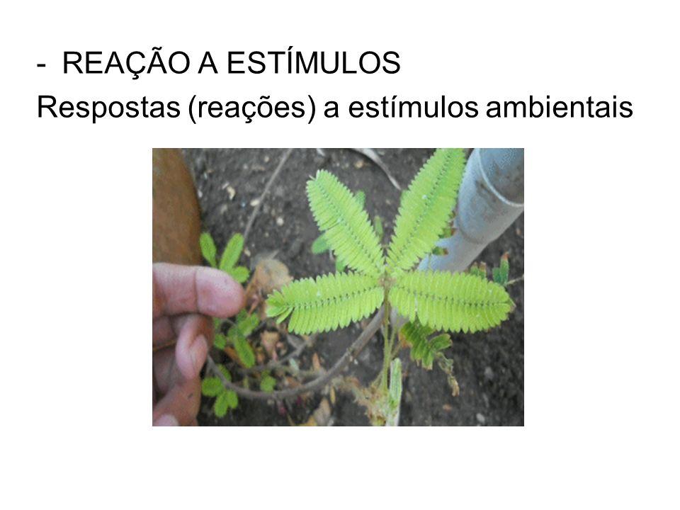 REAÇÃO A ESTÍMULOS Respostas (reações) a estímulos ambientais