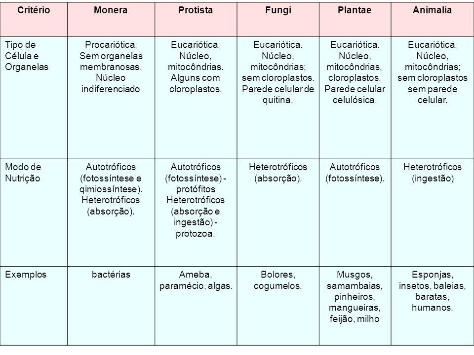 Critério Monera Protista Fungi Plantae Animalia