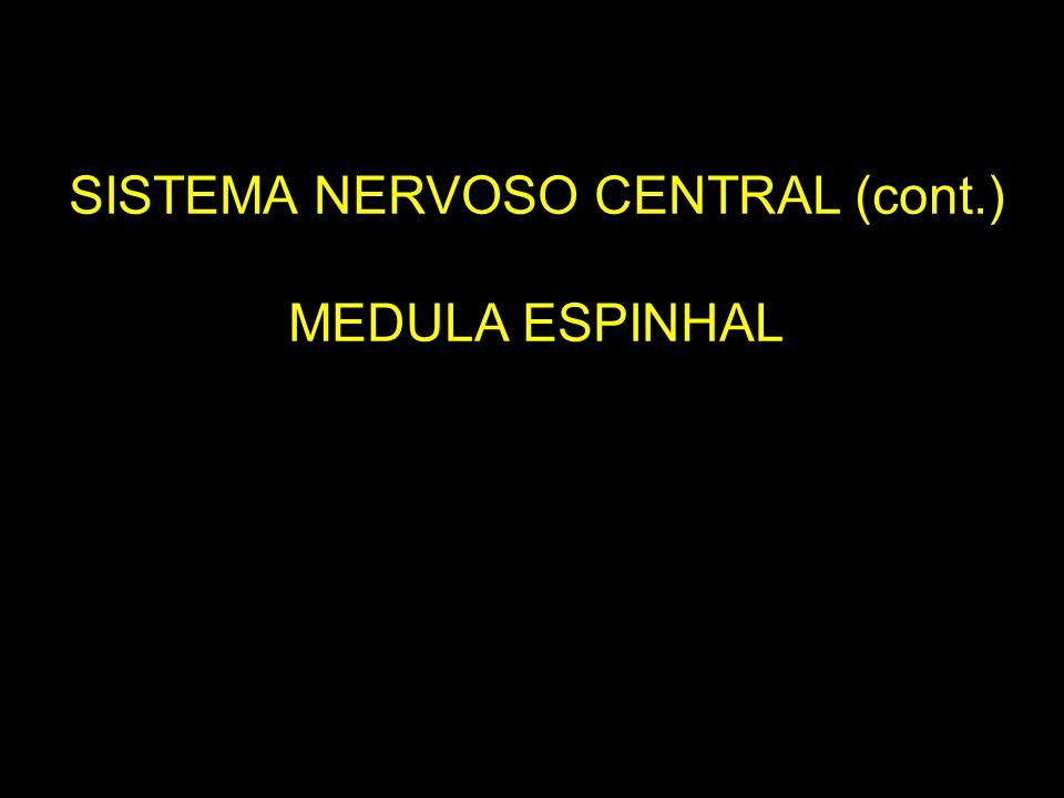 SISTEMA NERVOSO CENTRAL (cont.)