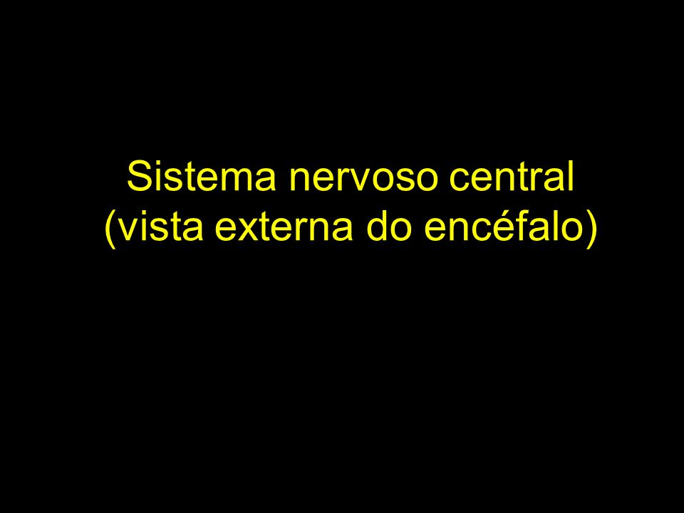 Sistema nervoso central (vista externa do encéfalo)