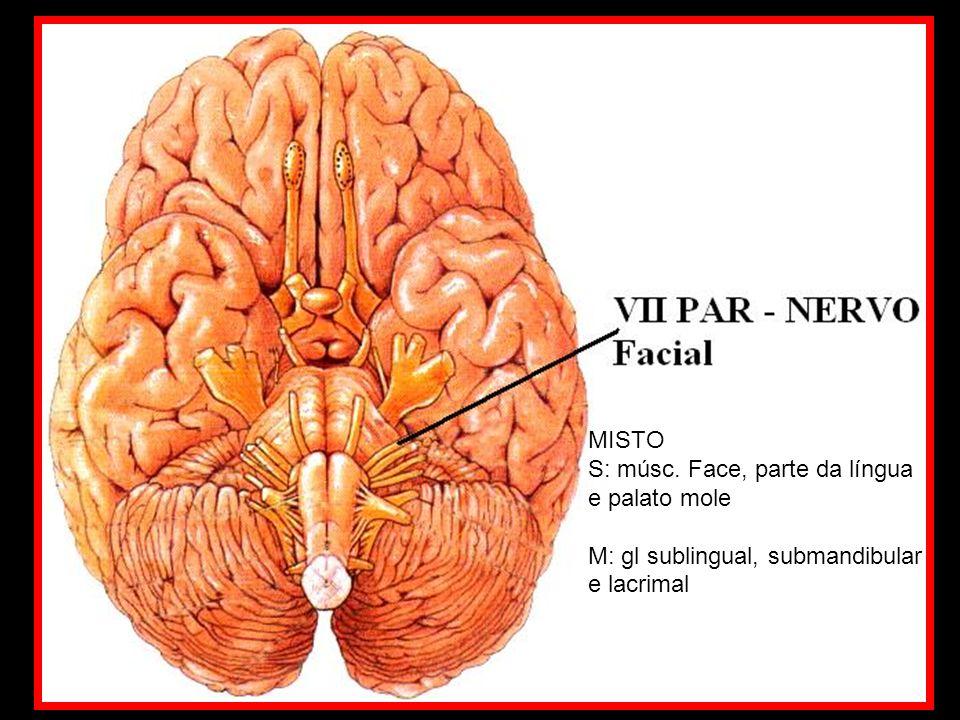 MISTO S: músc. Face, parte da língua e palato mole M: gl sublingual, submandibular e lacrimal