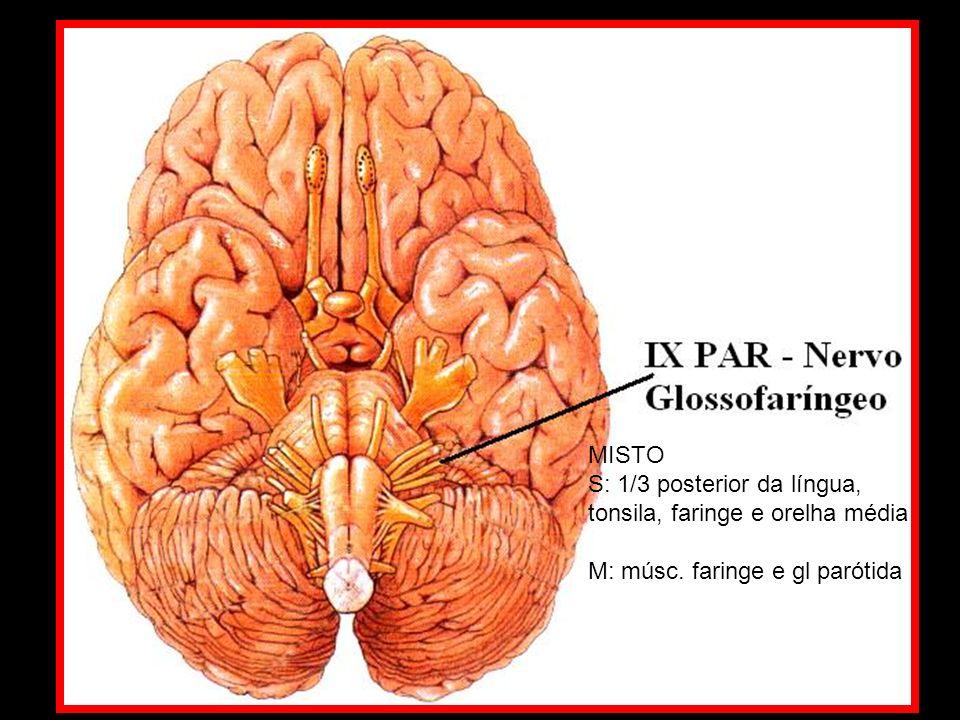 MISTO S: 1/3 posterior da língua, tonsila, faringe e orelha média M: músc. faringe e gl parótida