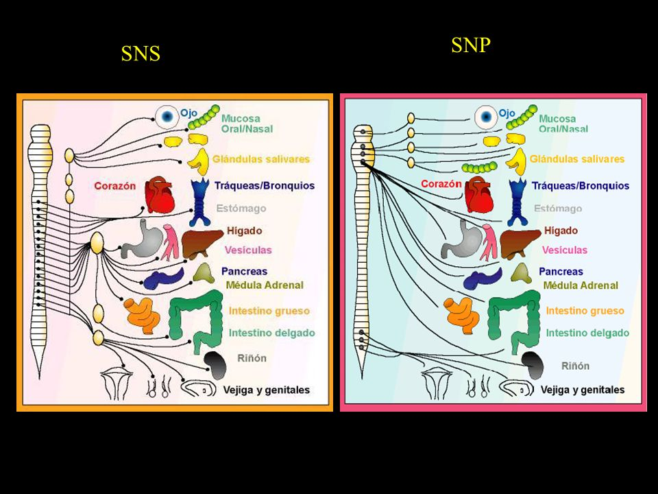 SNP SNS