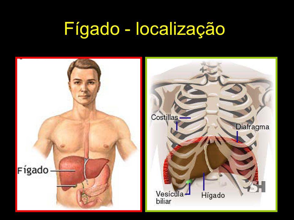 Fígado - localização