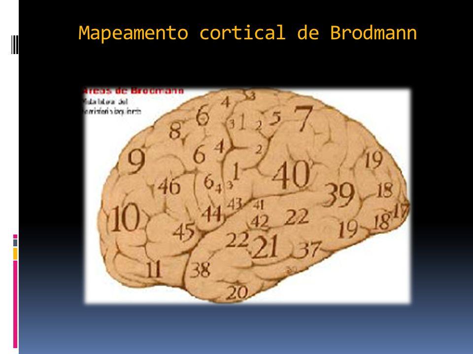 Mapeamento cortical de Brodmann