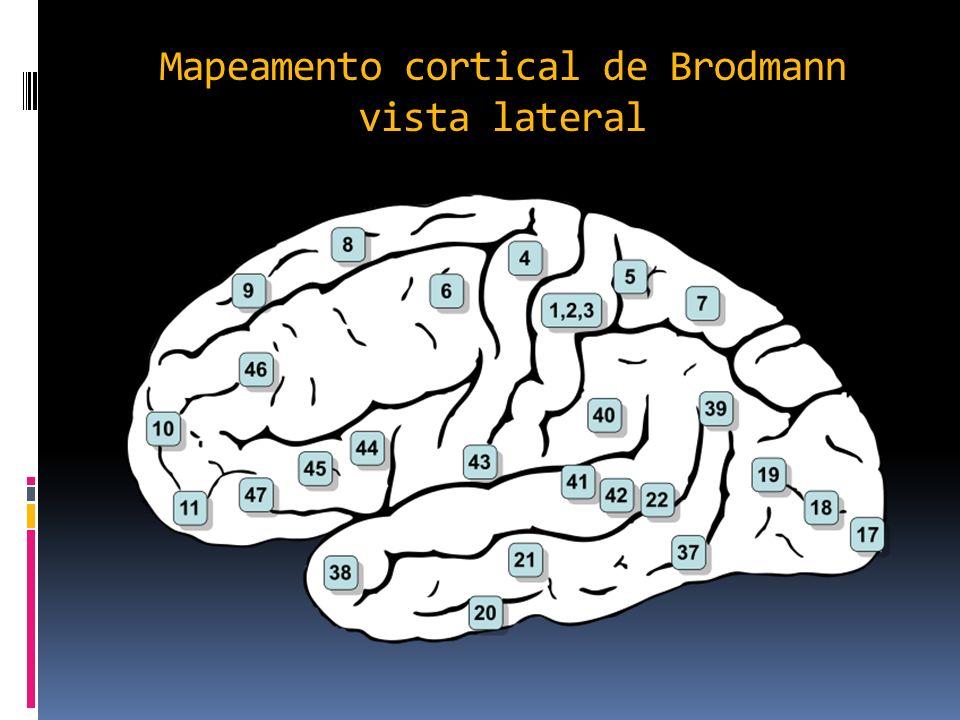 Mapeamento cortical de Brodmann vista lateral