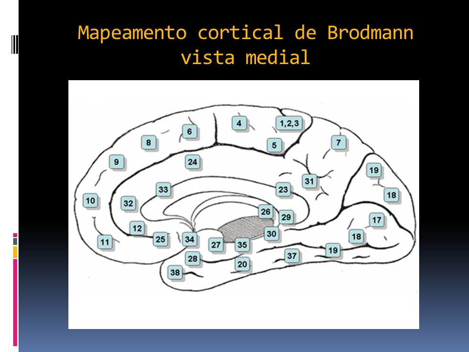 Mapeamento cortical de Brodmann vista medial