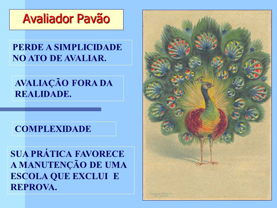 Avaliador Pavão PERDE A SIMPLICIDADE NO ATO DE AVALIAR.