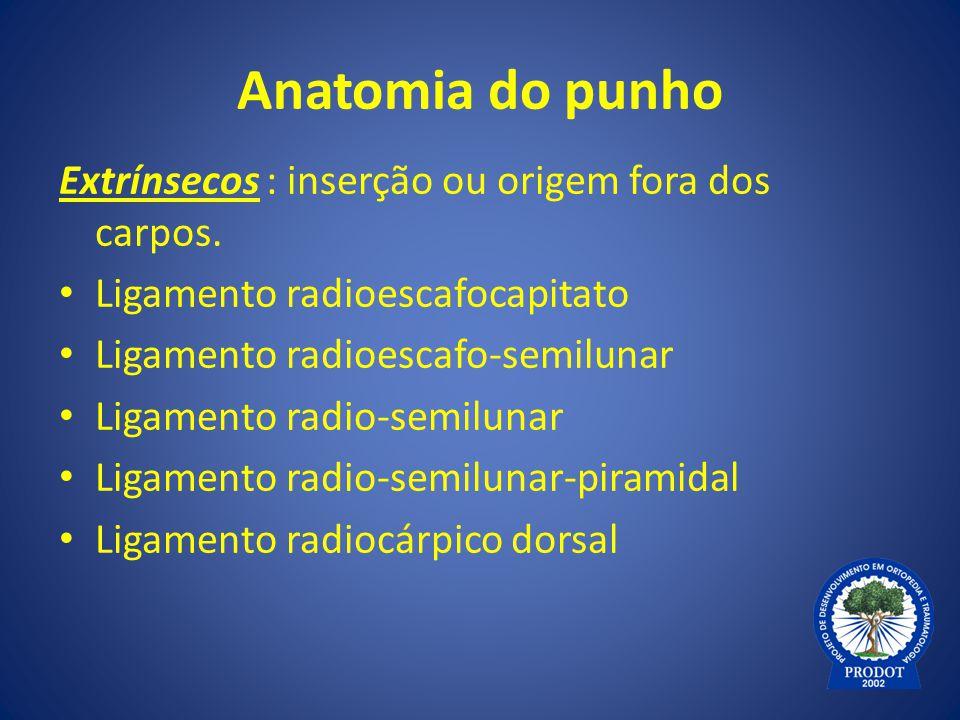 Anatomia do punho Extrínsecos : inserção ou origem fora dos carpos.