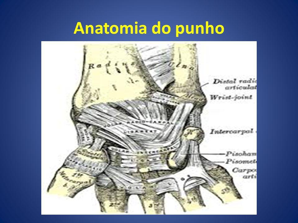 Anatomia do punho