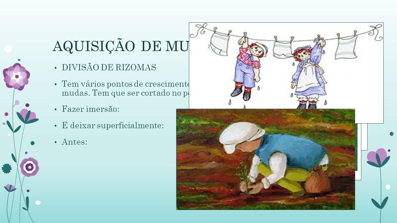 AQUISIÇÃO DE MUDAS DIVISÃO DE RIZOMAS