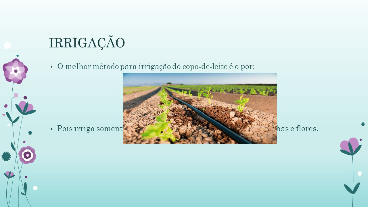 IRRIGAÇÃO O melhor método para irrigação do copo-de-leite é o por: