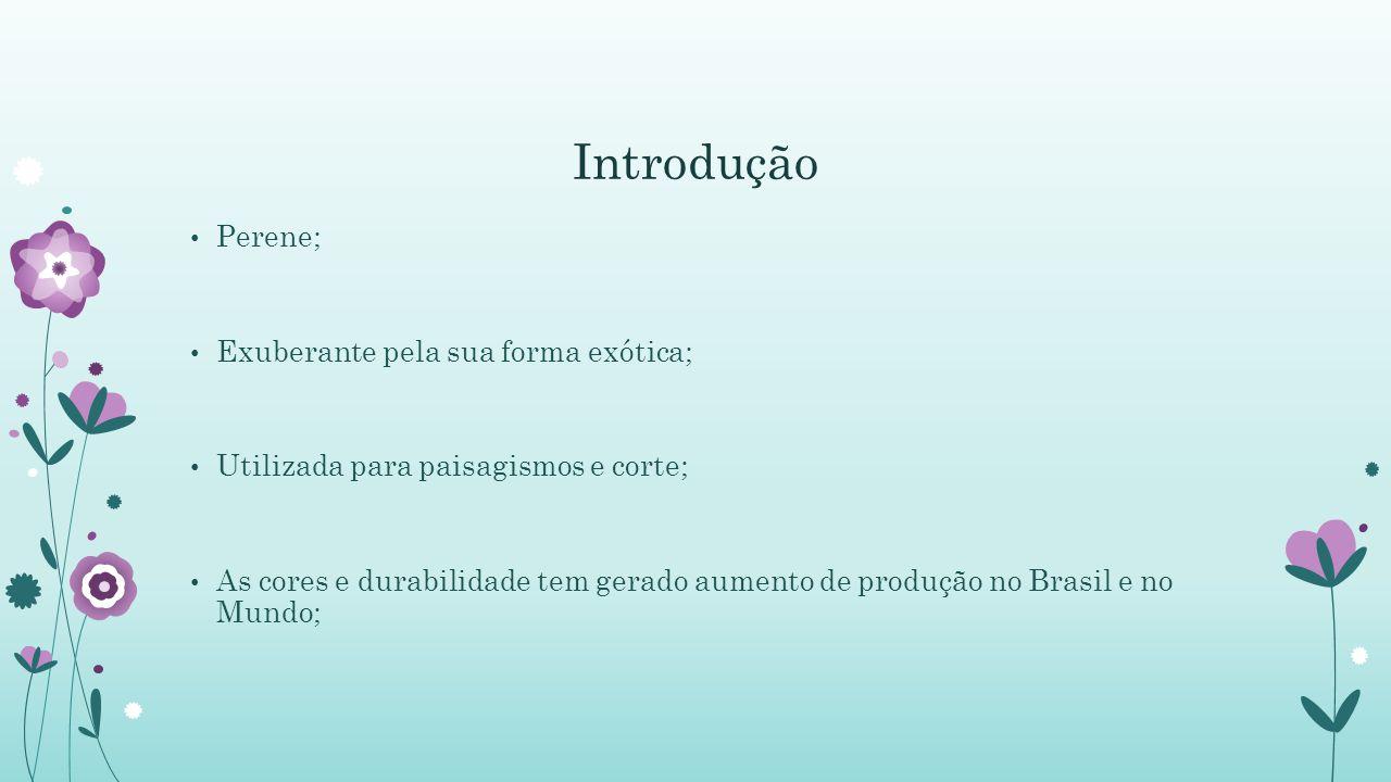 Introdução Perene; Exuberante pela sua forma exótica;