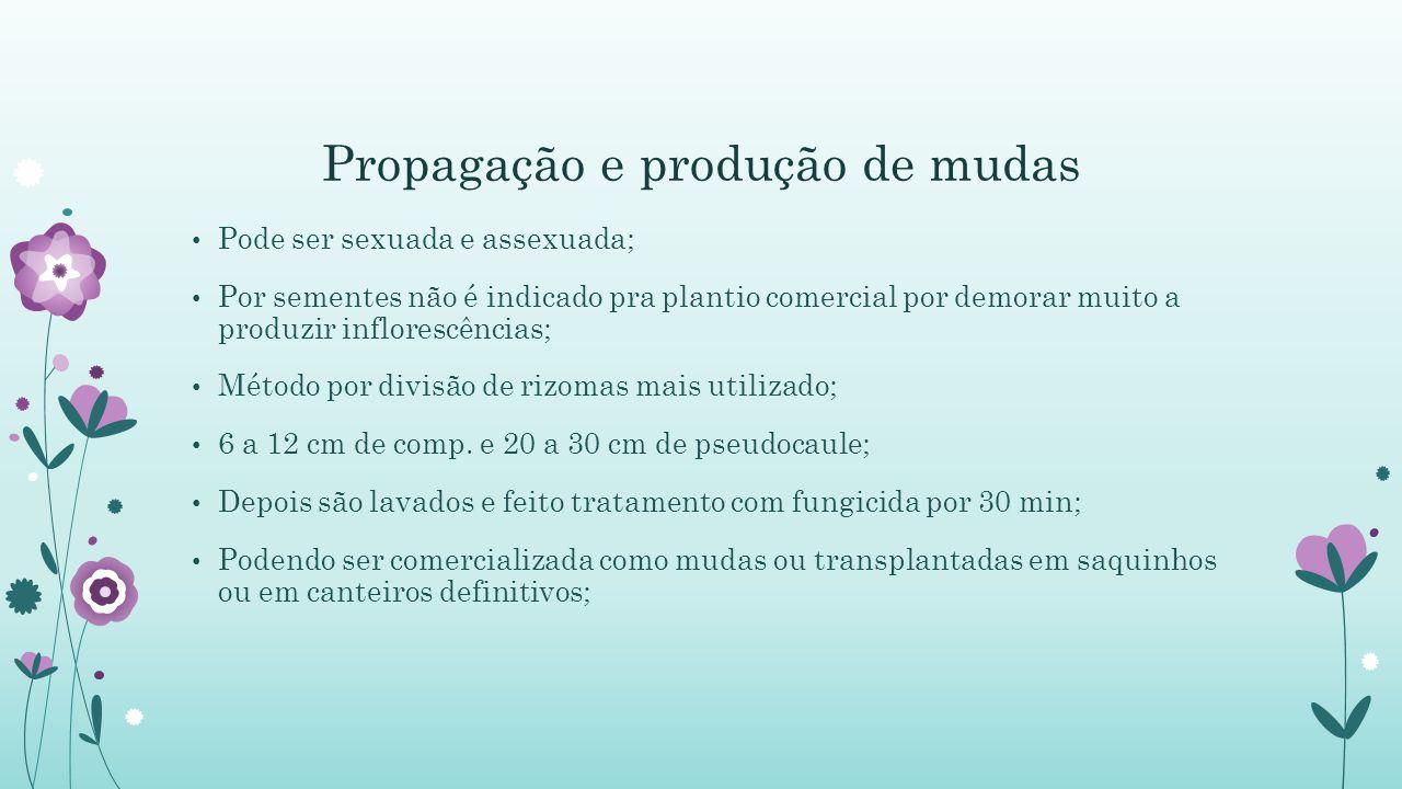 Propagação e produção de mudas
