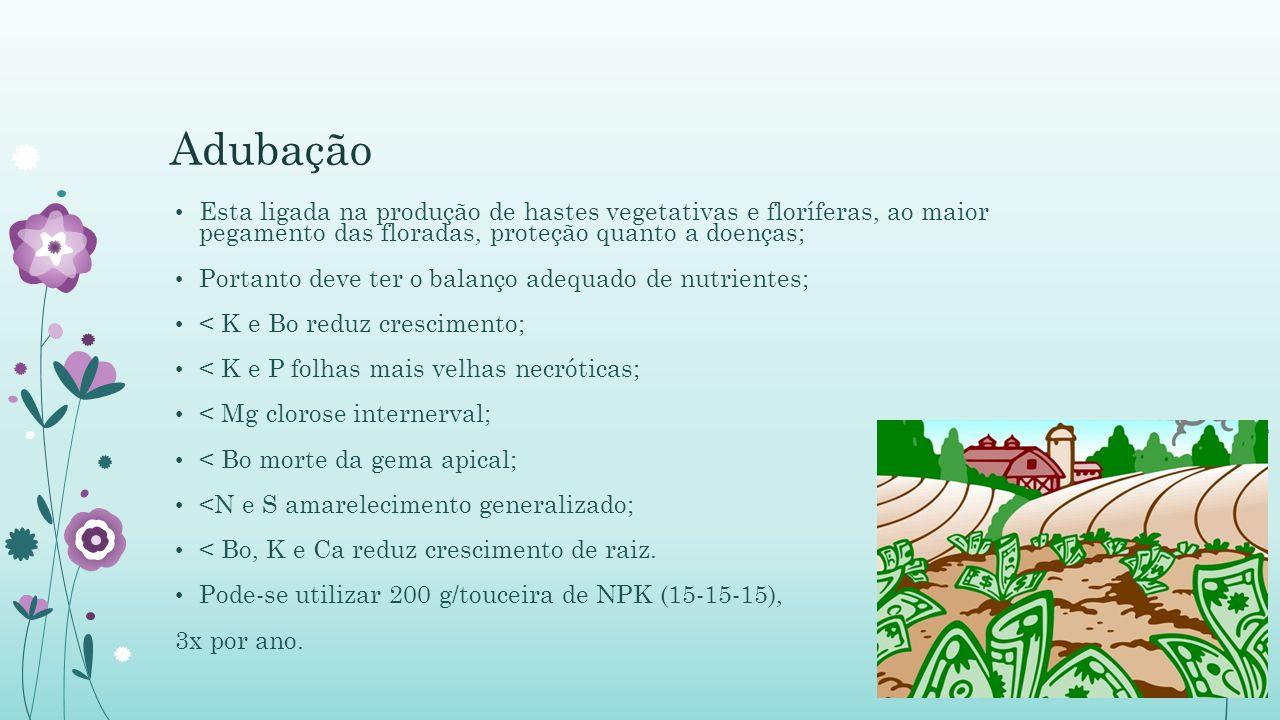Adubação Esta ligada na produção de hastes vegetativas e floríferas, ao maior pegamento das floradas, proteção quanto a doenças;