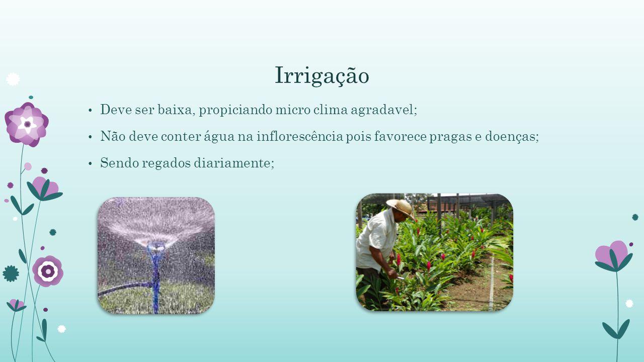 Irrigação Deve ser baixa, propiciando micro clima agradavel;
