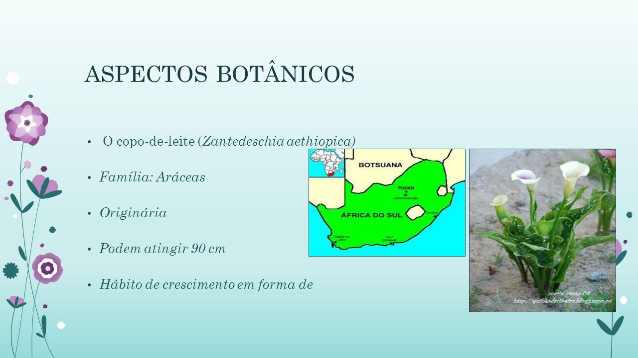 ASPECTOS BOTÂNICOS O copo-de-leite (Zantedeschia aethiopica)