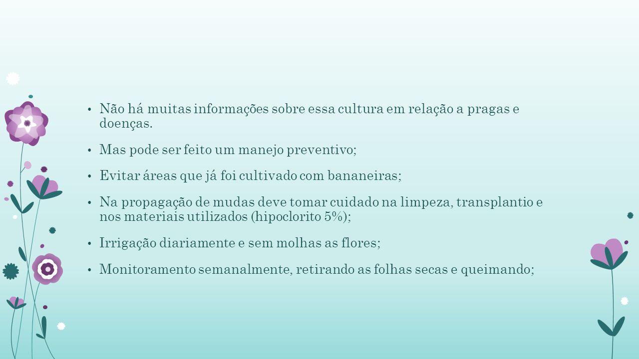 Não há muitas informações sobre essa cultura em relação a pragas e doenças.