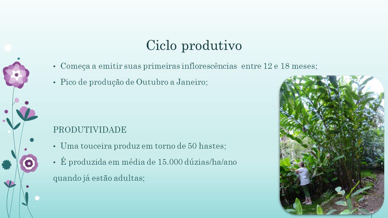 Ciclo produtivo Começa a emitir suas primeiras inflorescências entre 12 e 18 meses; Pico de produção de Outubro a Janeiro;