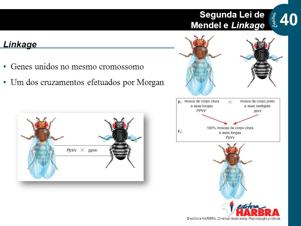 Linkage Genes unidos no mesmo cromossomo Um dos cruzamentos efetuados por Morgan