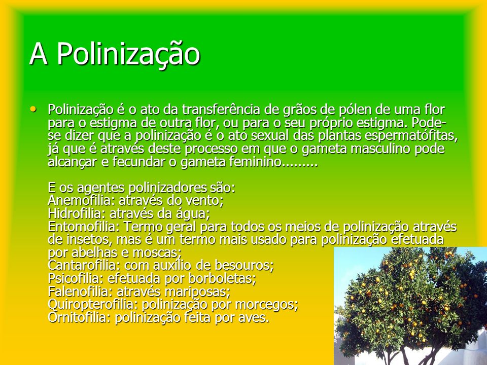 A Polinização