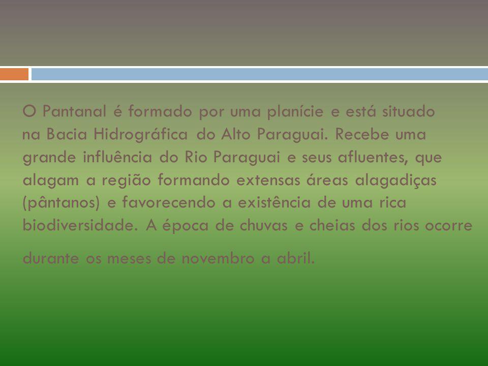 O Pantanal é formado por uma planície e está situado na Bacia Hidrográfica do Alto Paraguai.