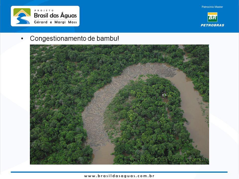 Congestionamento de bambu!
