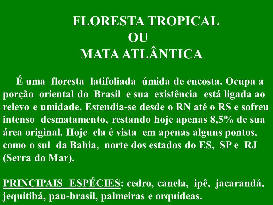 FLORESTA TROPICAL OU MATA ATLÂNTICA
