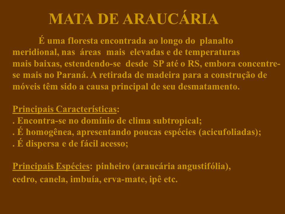 MATA DE ARAUCÁRIA É uma floresta encontrada ao longo do planalto meridional, nas áreas mais elevadas e de temperaturas.