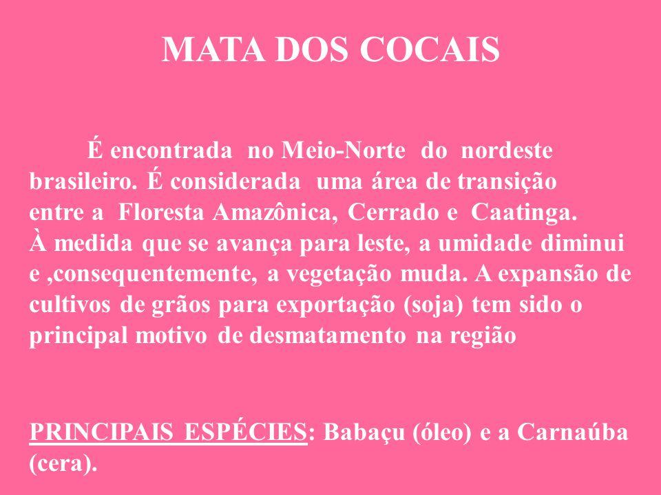 MATA DOS COCAIS É encontrada no Meio-Norte do nordeste