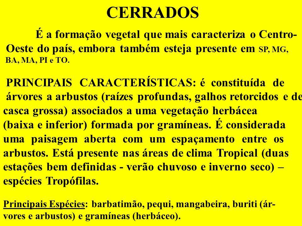 CERRADOS É a formação vegetal que mais caracteriza o Centro-