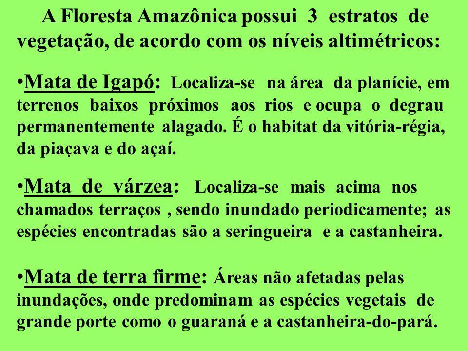 A Floresta Amazônica possui 3 estratos de