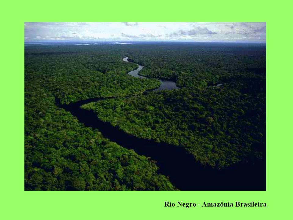 Rio Negro - Amazônia Brasileira