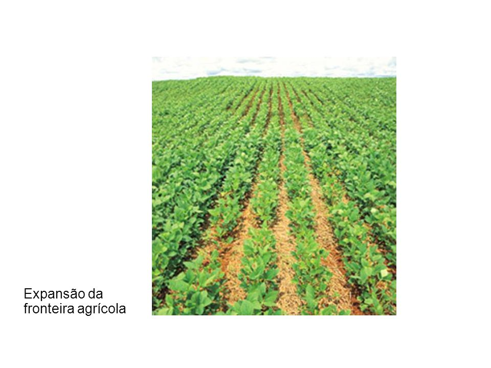 Expansão da fronteira agrícola