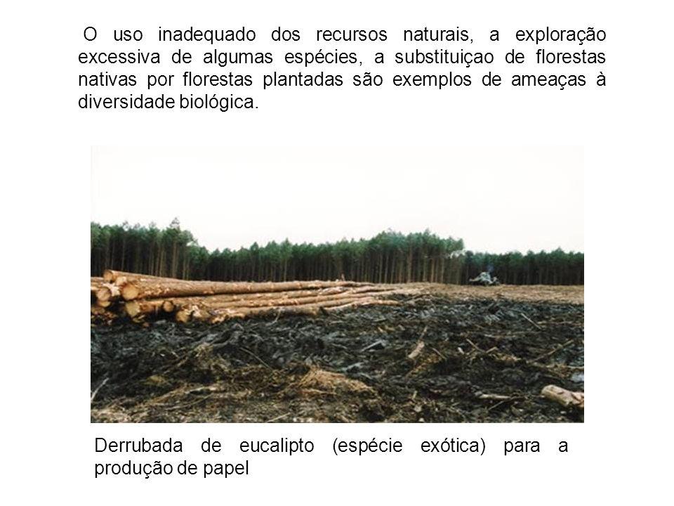 Derrubada de eucalipto (espécie exótica) para a produção de papel
