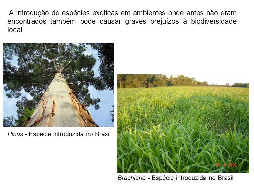 A introdução de espécies exóticas em ambientes onde antes não eram encontrados também pode causar graves prejuízos à biodiversidade local.