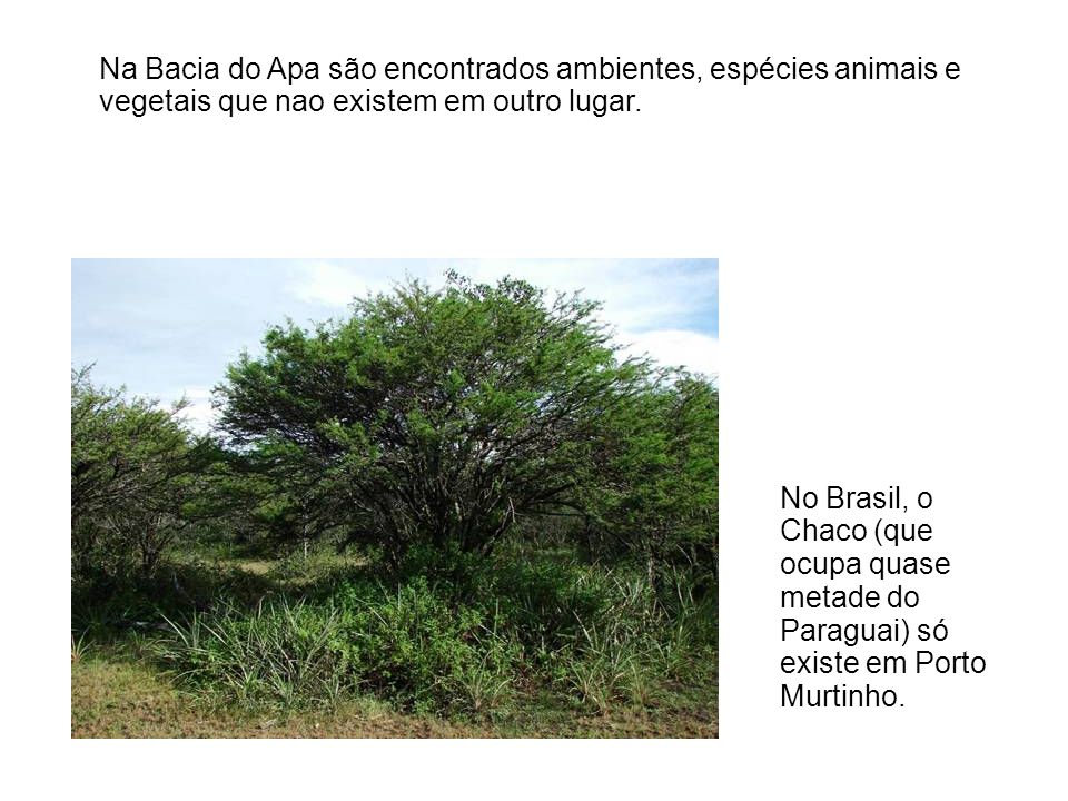 Na Bacia do Apa são encontrados ambientes, espécies animais e vegetais que nao existem em outro lugar.